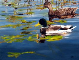 Cruising The Refuge - Mallards by HOULY1970