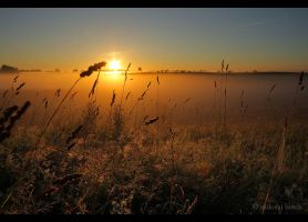 Sunrise in the fields by Mitas