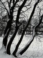 Trees in winter-series 3 by sonafoitova