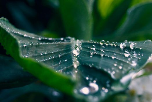 drops by Floridel