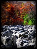Rocky Fall by Nathan-Ruby
