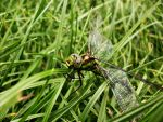 Dragonfly. II by LeaveThatTown