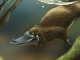 Daily Animal 5 - Platypus by DanjiIsthmus