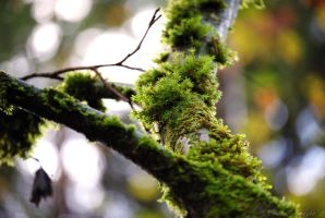 Mossy Branch by Fair-Uh-Grrr