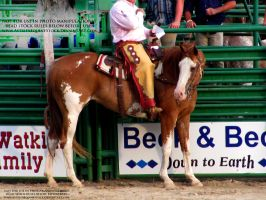 Rodeo 13-24 by AstriexEquineStock