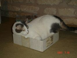 Cat In a Box by NullAndArt