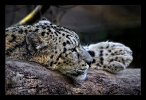 Lazy Leopard by WiDoWm4k3r