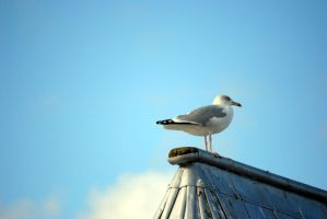 seagull V by Kitty-Kitty-Kit-Kat