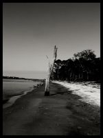 Driftwood Beach3 by sees2moons