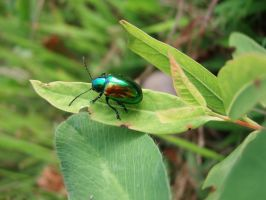Metalic Coleoptera by EdenUnderFallout