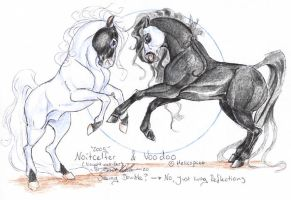 Noitcelfer and Voodoo by moonfeather