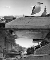 Points of View by Alharaca