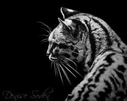 Margay by DeniseSoden