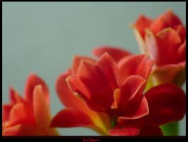 Red flowers by Sadir89