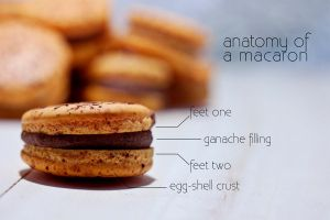 Anatomy of a macaron by munchinees