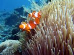Found Nemo by archbold87