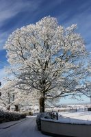 Snow On The Sycamore by lOveLifeOx