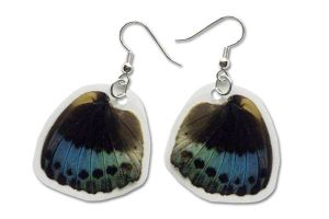 Real Archduke Butterfly Wing Earrings by TheButterflyBabe