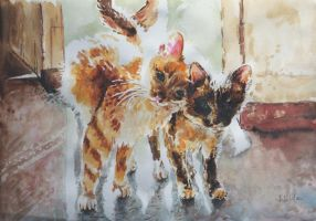 Cats by danuta50