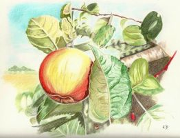 Pomme Crayons couleur by emicathe