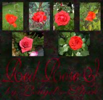 Red Rose Pack I by Lengels-Stock