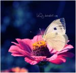 Nectar ... by LiiQa