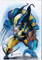 wolverine by Marcelo-Ilustra