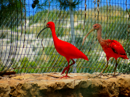 Pafos Zoo -14- by IoannisCleary