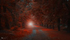 March to Fall by ildiko-neer