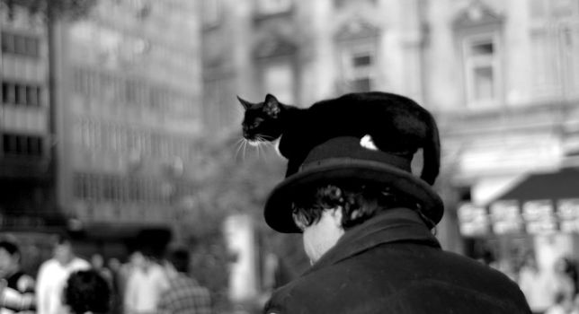 a.cat.on.top.of.a.man. by mormenekshe