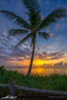 Ocean-Sunrise-with-Coconut-Palm-Tree-Florida by CaptainKimo