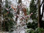 Iced branches 3 by AgentBunni