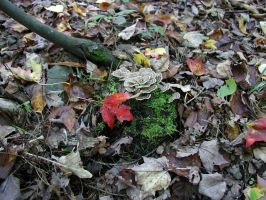 Fall Leaves Moss Fungus by yavel
