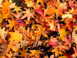 United colors of fall by Arrakis7