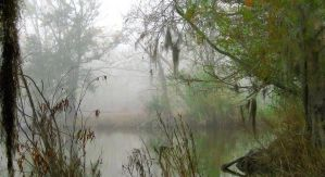 My Swampy Back Yard by SalemCat