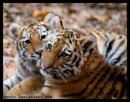 brothers by morho