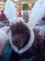 My 12 year old puppy wishing everyone Happy Easter by liongirl2289