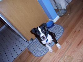 Tux the puppy by ShoTro