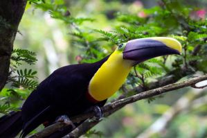 Curious Toucan by FreakyFT