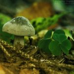 An Almost Lucky Mushroom by AljoschaThielen