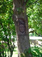 Pictures of Children Trapped in Trees!!  (03) by SKiNBuS