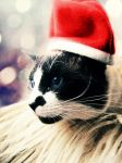 A meow Christmas by LaviniaU