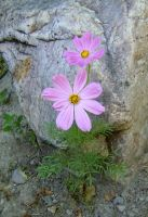 Flower and Stone by kln1671