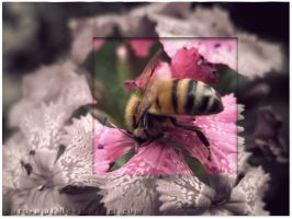 Diving Bee-half colored by sara-nmt