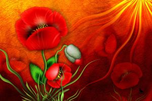 Poppies by coby01