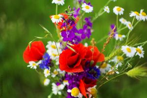 Wildflowers by Maria-Magnific