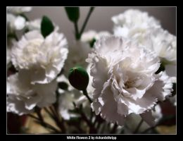 White Flowers 2 by richardxthripp