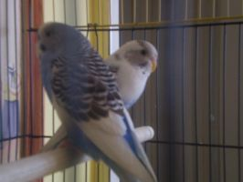 Zeus and Juno, Birds by Cleverun
