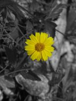 Yellow Flower by Sweetlittlejenny