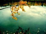 Fall Reflections by Vethonwen